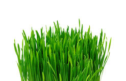 Green grass over white Stock Photos