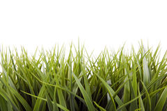 Green grass over a white background Stock Photography