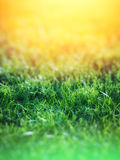 Green Grass over Yellow Background Stock Photography
