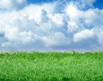 Green grass panorama on blue sky Stock Photography