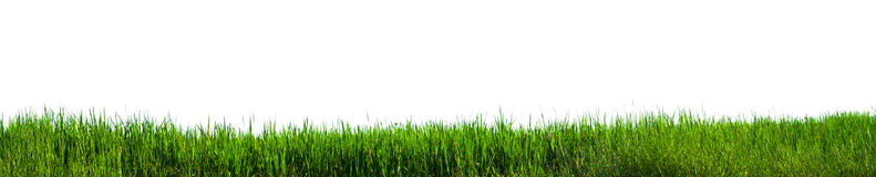 Green grass panorama Royalty Free Stock Photos