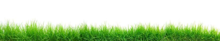 Green grass panorama Stock Image