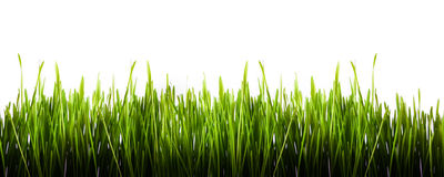 Green grass panorama isolated Royalty Free Stock Photography