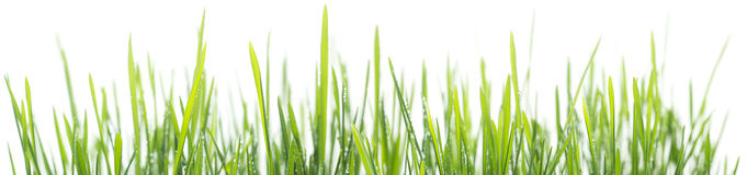 Free Green Grass Panorama Isolated On White Background Royalty Free Stock Photography - 67822337