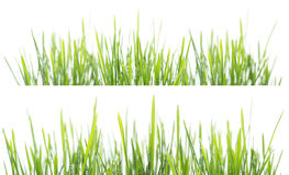 Green grass panorama isolated on white background Royalty Free Stock Photos