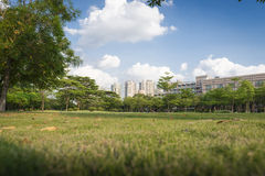 Green grass in the park Stock Image