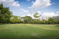 Green grass in the park Royalty Free Stock Image