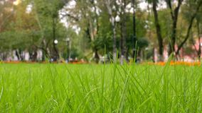 Green grass in park, background. Urban scene.