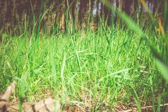 Green grass in the park royalty free stock images