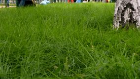 Green grass in park. Group of city gardeners working with lawnmower and trimmer stock video
