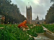 Green grass in the park near the Parliament. London, Great Britain stock photos