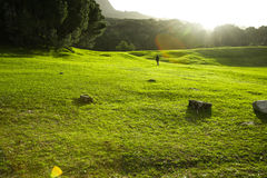 Green grass in park. Green grass in South Africa Cape town park during sunset Royalty Free Stock Images