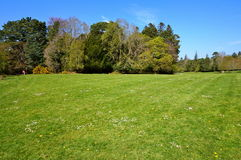 Green grass and trees on background. Green grass on park during spring Royalty Free Stock Photography