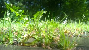 Green grass in the park Stock Photo
