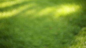 Green grass in the park summer day stock footage