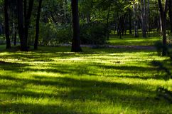Green grass in the park. Summer time in the garden royalty free stock photos