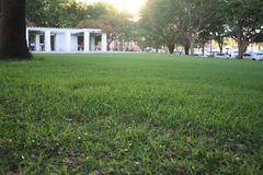 Green grass in the park, the sun set against stock image