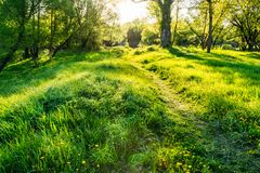 Green grass in the park. Sunset. Nobody. Beautiful green grass to the footpath. Sunset hour. Landscape. Nobody Stock Images