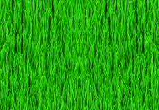 Green Grass Patch Background Royalty Free Stock Images