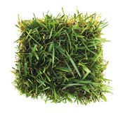Green Grass Patch Stock Image