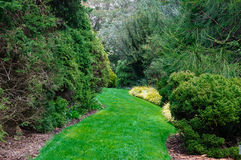 Green grass path in the garden. Panoramic view of nice green park and grass path Royalty Free Stock Images