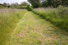 Green grass path Royalty Free Stock Photography