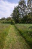 Green grass path Stock Image