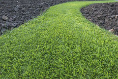 Green grass path Royalty Free Stock Photos
