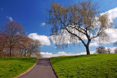 Green grass and pathway against blue sky Royalty Free Stock Photo