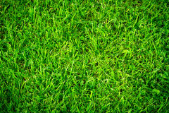 Green grass pattern. Background with vignette Stock Photo