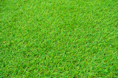 Green Grass Pattern Royalty Free Stock Images