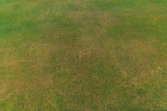 Green grass pattern. Stock Image