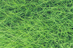 Green grass pattern, abstract texture background. Fresh nature. Stock Photography