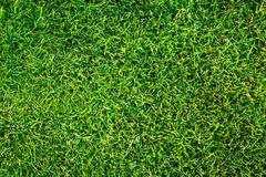 Green grass pattern Stock Images