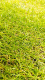 Green grass pattern Stock Image