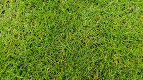 Green grass pattern Stock Photos