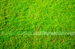 Green grass. Pattern and background Royalty Free Stock Photography