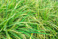 Green grass pattern cover Stock Images