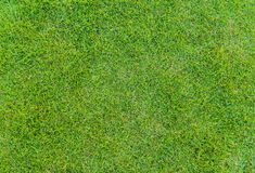 Green Grass Pattern From Golf Course At Sunset Tim Stock Image