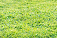 Green grass pattern from golf course at sunset tim Stock Photos