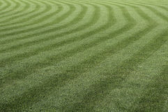 Green grass pattern. Stock Image