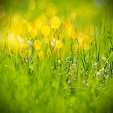 Green grass pattern Stock Image