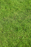 green Grass pattern texture background Royalty Free Stock Image