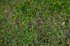 Green Grass Pattern Texture Stock Images