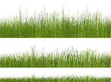 Green grass pattern on white background Royalty Free Stock Image