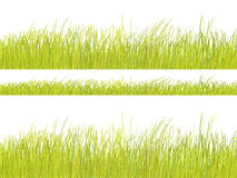 Green grass pattern on white background Stock Images