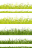 Green grass pattern on white background Royalty Free Stock Photography