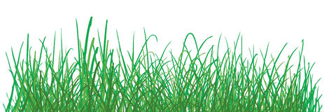Green grass pattern on white background. vector Stock Photography