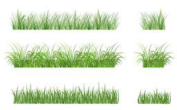 Green grass patterns. Green grass elements for design and decorate Royalty Free Stock Photography