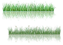 Green grass patterns. With reflections for environment or ecology design Stock Image